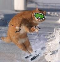 Revius wintersport